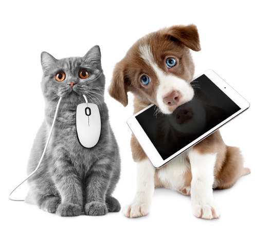 Dog & Cat for App