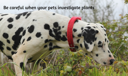 Dog Sniffing a Plant