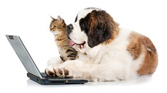 Dog and Cat on Computer
