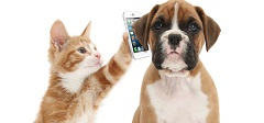 Puppy & Kitten with Phone