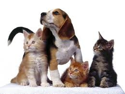 beagle_with_kittens.jpg
